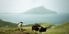 Вівці допомагають знімати панорами для Google Street View